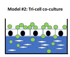 Co-Culture Model: Blue – collagen matrix; White Diamonds – smooth muscle; Green Circle – monocytes; White Boxes – endothelial cells
